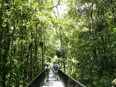 Daintree Dreaming - Mossman Gorge